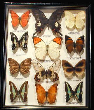1_butterflybox